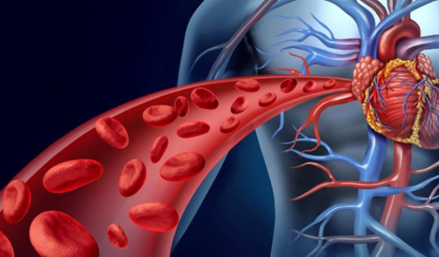 Increase Blood Circulation to Improve Cardiac Health