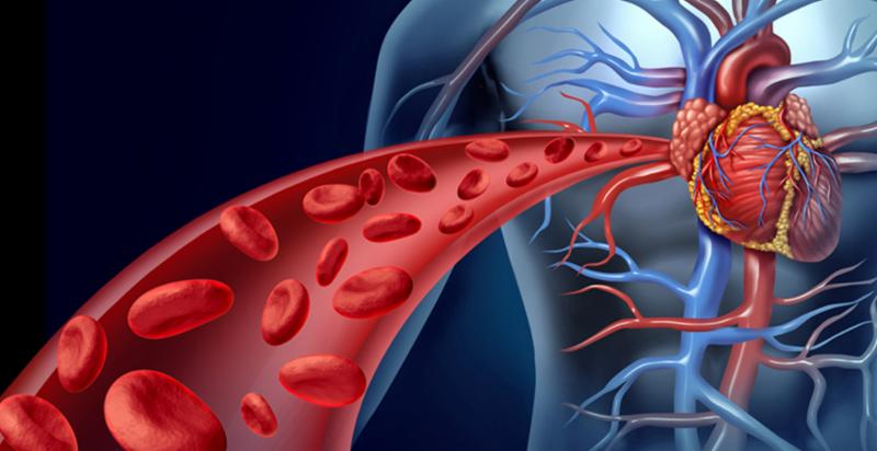 Increase Blood Circulation to Improve Cardiac Health